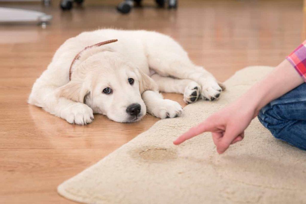 Carpet Cleaning | Boise Idaho | (208) 343-0833